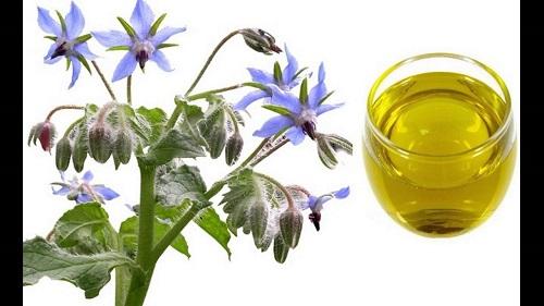 How to make green tea extract.jpg